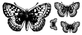 Butterfly_Set_-_web